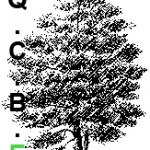 logo QCBE